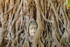 Buddhahuvudet som flätas ihop i träd, rotar, Ayutthaya, Thailand Royaltyfria Foton