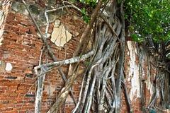 3 Buddhas в виске дерева ремня Ang стоковое фото rf