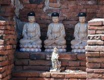 3 Buddhas в Autthaya стоковые фото