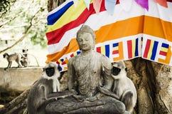 Buddhas Affen Stockfoto