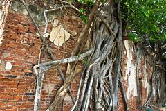3 Buddhas in Ang Thong Tree Temple royalty free stock photo