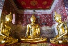 Buddhas d'or dans le sutat de wat Images stock