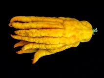 Buddhas-Hand-cedrat Zitrusfruchtzitrone Stockbild