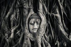 Buddhas head stock photos