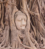 Buddhas head Stock Images