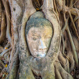 Buddhas head in Mahathat temple is Royalty Free Stock Photography