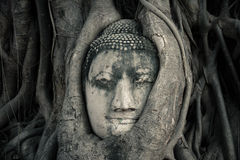 Buddhas Kopf, Ayutthaya, Thailand stockfoto