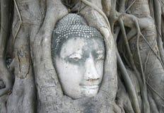 Buddhas Kopf wird eingebettet Stockbild