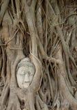 Buddhas-Kopfstatue Stockfotos