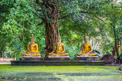 Buddhas oud onder bomen stock afbeelding
