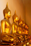 Buddhas in Wat Po. Group of buddhas, Wat Po, Bangkok, Thailand Royalty Free Stock Photo