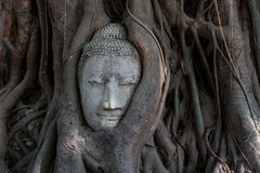 Buddhastaty Arkivbilder