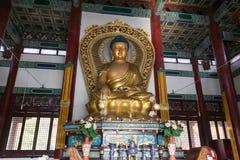 Buddhastaty inom den kinesiska templet i Lumbini, Nepal royaltyfri foto