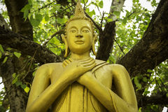 Buddhastatyer den luangtempel Arkivbilder