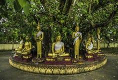 Buddhastatyer för sju dagar Royaltyfria Foton