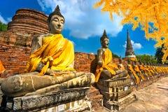 Buddhastatyer i Ayutthaya, Thailand, arkivbilder