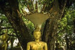 Buddhastatyer med sju head hästkrake a Royaltyfri Foto