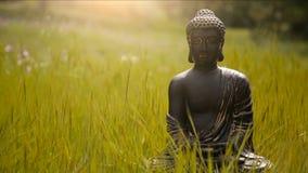 Buddhastatyett i mitt av den gröna ängen stock video