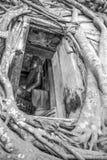 Buddhastatyn i den kyrkliga räkningen vid träd` s rotar Royaltyfri Bild