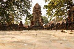 Buddhastatyn i Wat Mahathat fördärvade templet, Ayutthaya, Thailand royaltyfria bilder