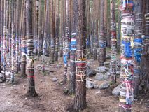 Buddhism. Forest in Buryatia. Color Ribbon Wishes royalty free stock photos