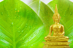 Buddhism statue ,field on green tree and sun in morning Royalty Free Stock Photo