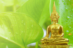 Buddhism statue of green tree and sun in morning Stock Photo