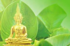 Buddhismusstatue auf grünem Baum und Sonne am Morgen Lizenzfreies Stockfoto