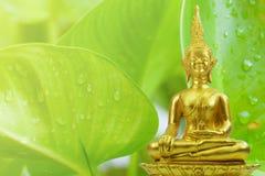 Buddhismusstatue des grünen Baums und Sonne am Morgen Stockfoto