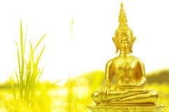 Buddhismusstatue, Feld des grünen Baums und Sonne am Morgen Stockfotografie