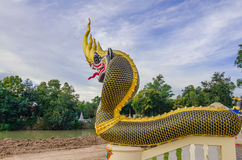 Buddhist art. Dragon head,gold,black and yellow stripes stock image