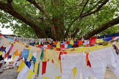Buddhist Bodhi tree in Kandy Sri Lanka. A Buddhist Bodhi tree in Kandy Sri Lanka stock photos
