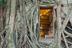 Buddhist church surrounded by tree root Stock Image