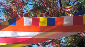 Buddhist flag. Hung amidst flowering plants Stock Photos