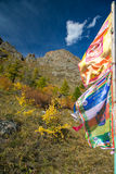 Buddhist flags fluttering in the wind Royalty Free Stock Images