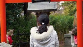 Buddhist girl praying at Japanese red shrine temple stock video