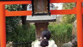 Buddhist girl praying at Japanese temple stock footage