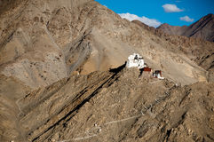 Buddhist monastery Namgyal Tsemo. Leh. India Royalty Free Stock Photography
