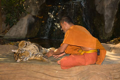 Buddhist monk with a bengal tiger Stock Photo