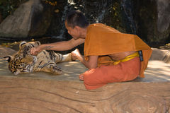 Buddhist monk with a bengal tiger Stock Photos