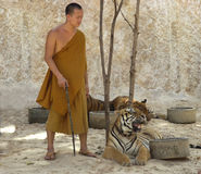 Buddhist monk with bengal tiger,thailand,asia,cat Royalty Free Stock Photography