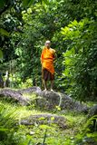 Buddhist monk in rainforest Royalty Free Stock Images