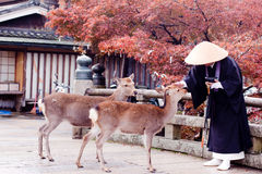 Buddhist monk and two deers Royalty Free Stock Images