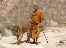 Buddhist monk walking with bengal tiger,thailand