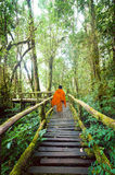 Buddhist monk at wooden bridge in misty tropical rain forest Stock Images