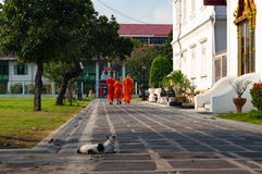 Buddhist monks in bright orange robe walking Royalty Free Stock Photography