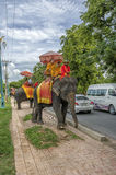 Buddhist monks on an elephant Royalty Free Stock Images