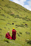 Buddhist monks in grass covered hills Royalty Free Stock Photography