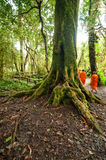Buddhist monks in misty tropical rain forest. Sun beams shining Stock Images