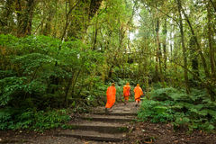 Buddhist monks in misty tropical rain forest Royalty Free Stock Photos
